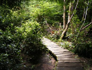 The first section of boardwalk on Cape Flattery Trail