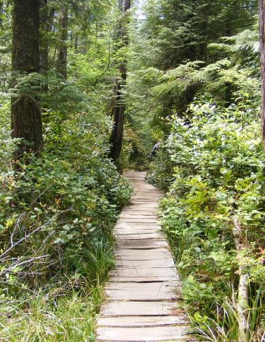 Cape Flattery Trail