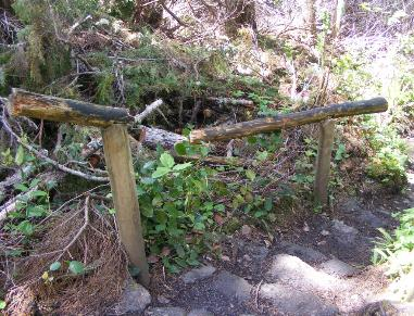 Olympic Nation Park Cape Flattery Trail Broken Handrail