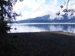 Lake Quinault Olympic National Park