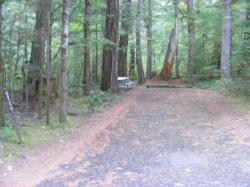 Loop C Site 111 - Newhalem Campground North Cascades NP