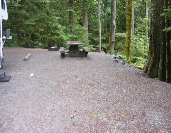Site 66 C Loop Fairholme Campground Olympic