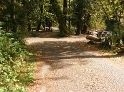 Staircase Campground  - Olympic National Park