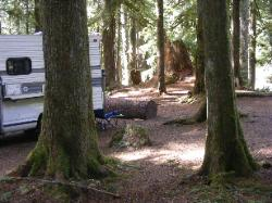 Staircase Campground Site 01 - Olympic National Park