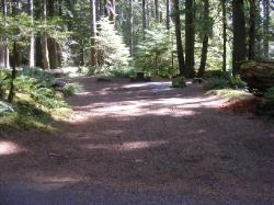 Staircase Campground Site 03 - Olympic National Park