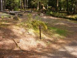 Staircase Campground Site 07 - Olympic National Park