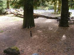 Staircase Campground Site 12 - Olympic National Park