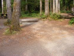 Staircase Campground Site 18 - Olympic National Park