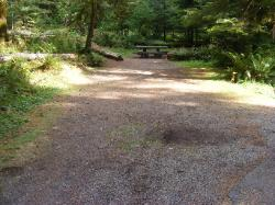 Staircase Campground Site  24 - Olympic National Park