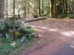 Staircase Campground Site  32 - Olympic National Park