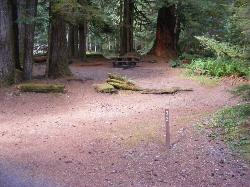 Staircase Campground Site  33 - Olympic National Park