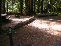 Staircase Campground Site 34 - Olympic National Park