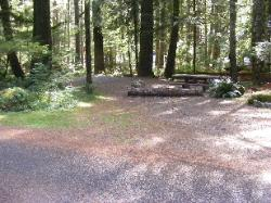 Staircase Campground Site 35 - Olympic National Park