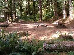 Staircase Campground Site  38 - Olympic National Park