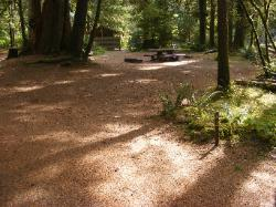 Staircase Campground Site  43 - Olympic National Park