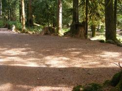 Staircase Campground Walk-in Sites  - Olympic National Park