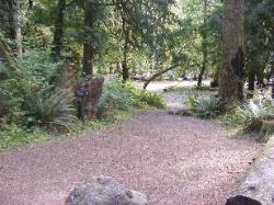 Staircase Campground Path to Walk-in Sites - Olympic National Park