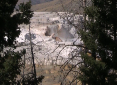 Mammoth Hot Springs Terrace Water Fall