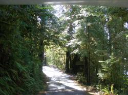 Willaby Campground Road  Olympic National Park