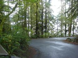 Willaby Campground Olympic National Park Site 05