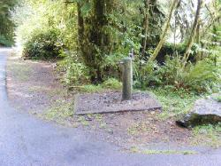 Willaby Campground Olympic National Park Site 11