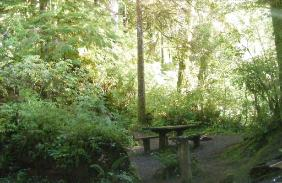 Willaby Campground Olympic National Park Site 17
