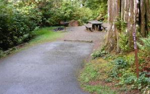 Willaby Campground Olympic National Park Site 20