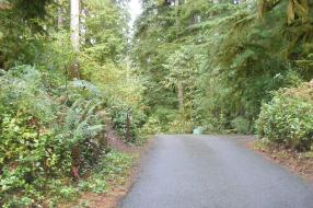 Willaby Campground Olympic National Park Site 21