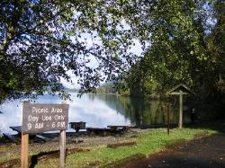 Willaby Campground Day Use Area Lake Quinault Olympic National Park